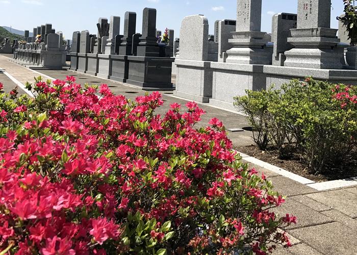 墓苑内に咲くツツジの花